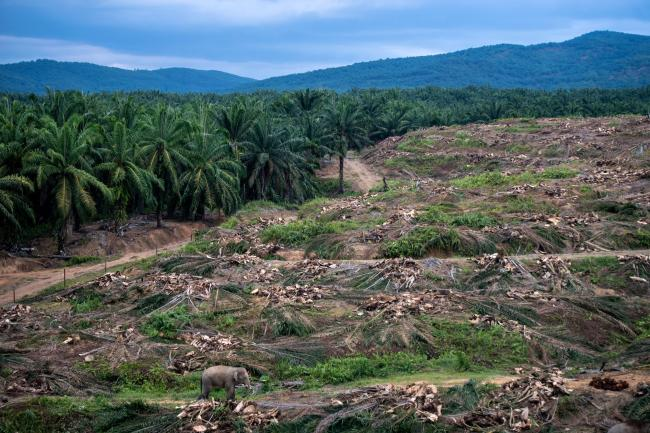 PALM OIL/DEFORESTATION
