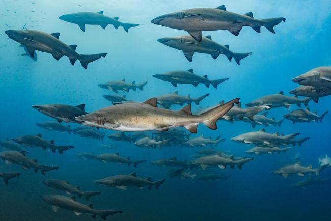 Top 10 facts about sharks | WWF