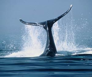 Top 10 facts about whales