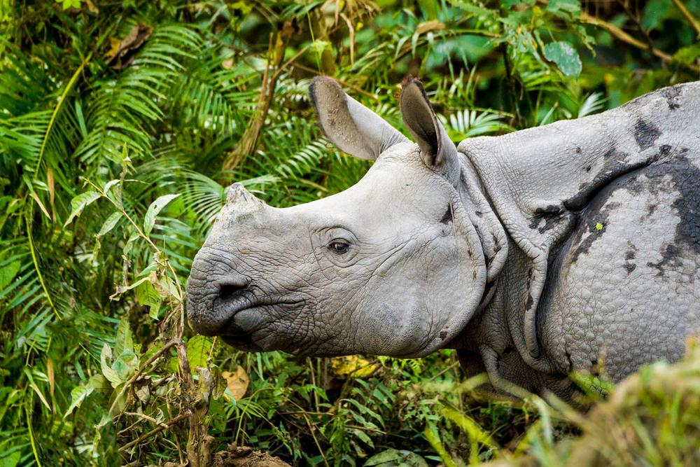 Top 10 facts about Rhinos