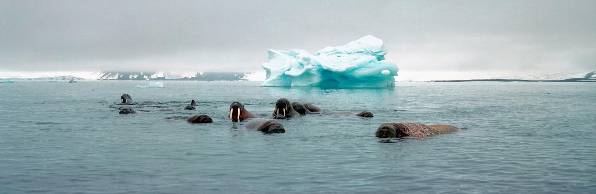 Top 10 facts about Walrus