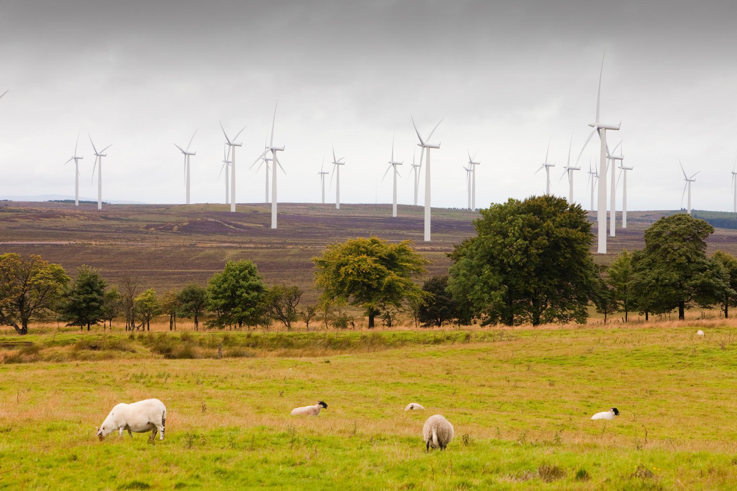 Delivering on Net Zero: Scottish Agriculture - Nov 2019