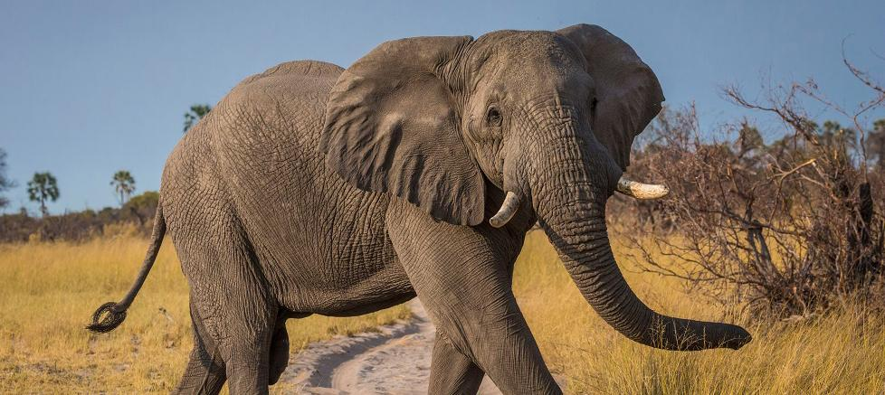 Top 10 facts about elephants