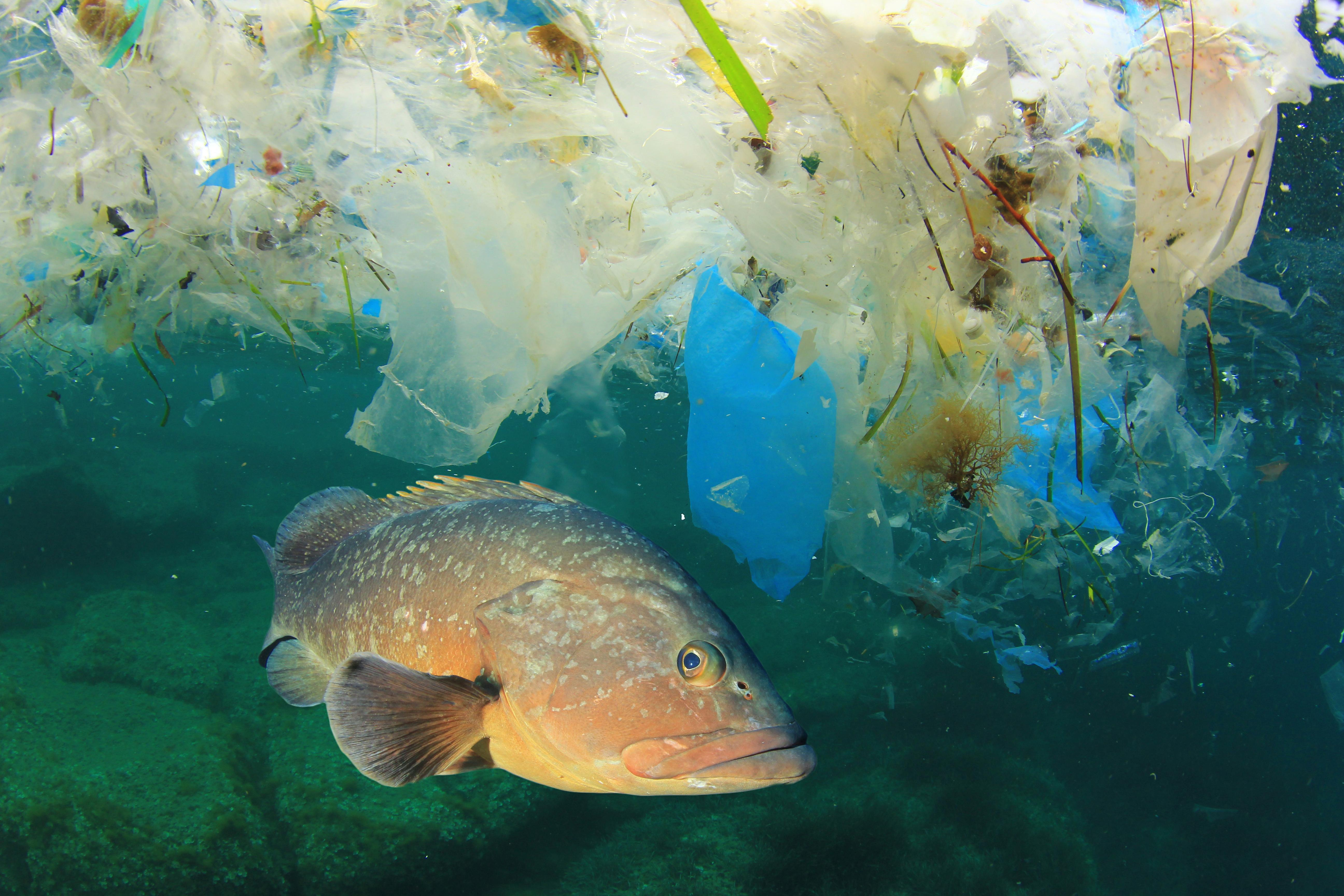 Oceans and Plastic Pollution