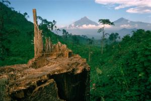 Deforestation for fuel by Hutu refugees - Virunga