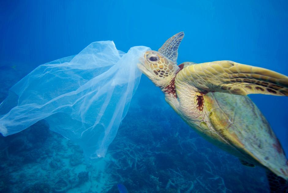 Image result for marine plastic turtle