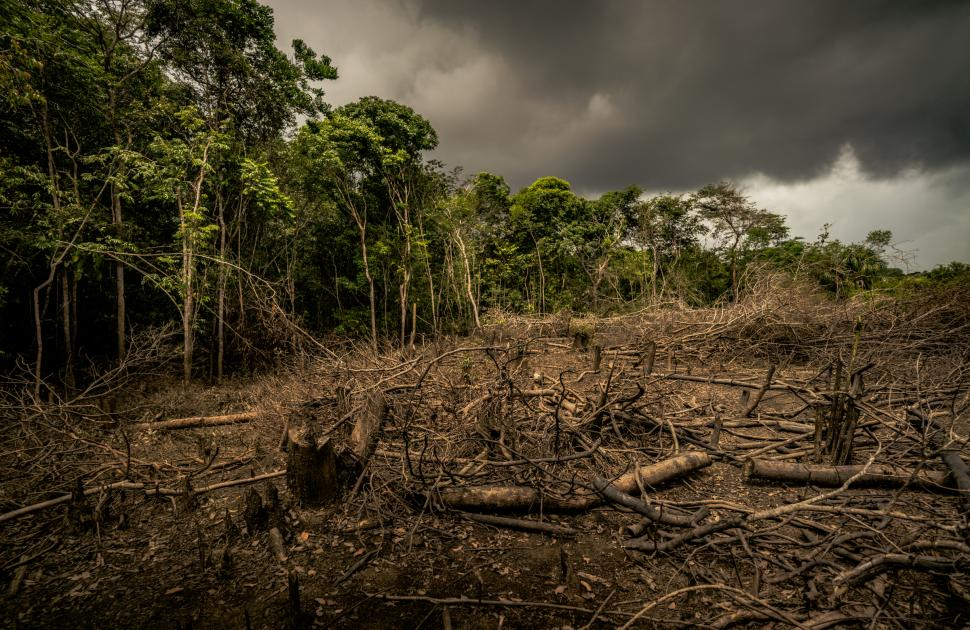 Deforestation and Climate Change Driving Old-Growth Forest Loss