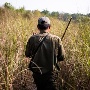 Ranger in tall grass in the Terai Arc