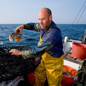 Fisherman holding a European lobster