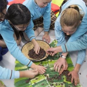 Pupils taking part in the Tropical Chocolate workshop © Tristan Fewings / WWF-UK
