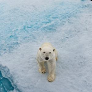 11 facts you didn't know about polar bears | WWF